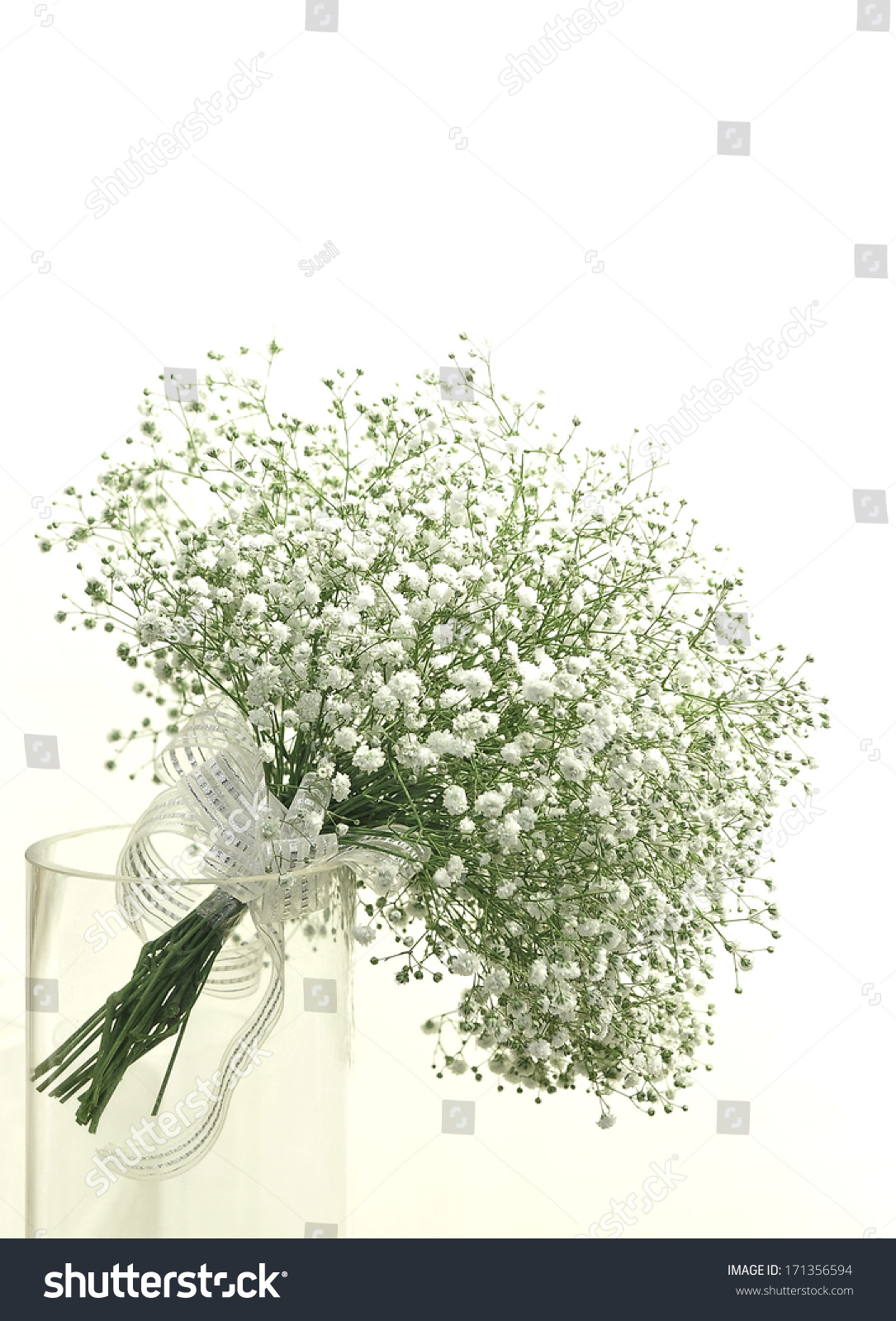 Gypsophila Baby S Breath Flowers Light Airy Masses Small White Flo