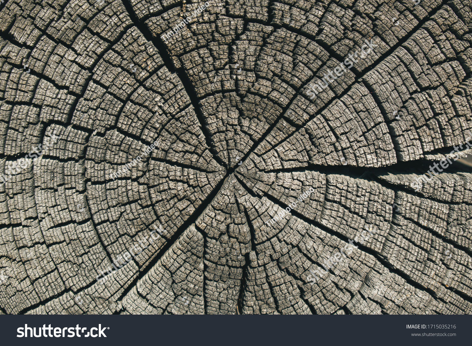 stock-photo-butt-of-old-log-for-backdrop
