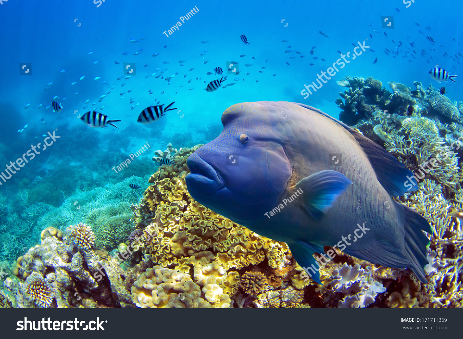 Great barrier reef fish stock photo 171711359 shutterstock for Great barrier reef fish