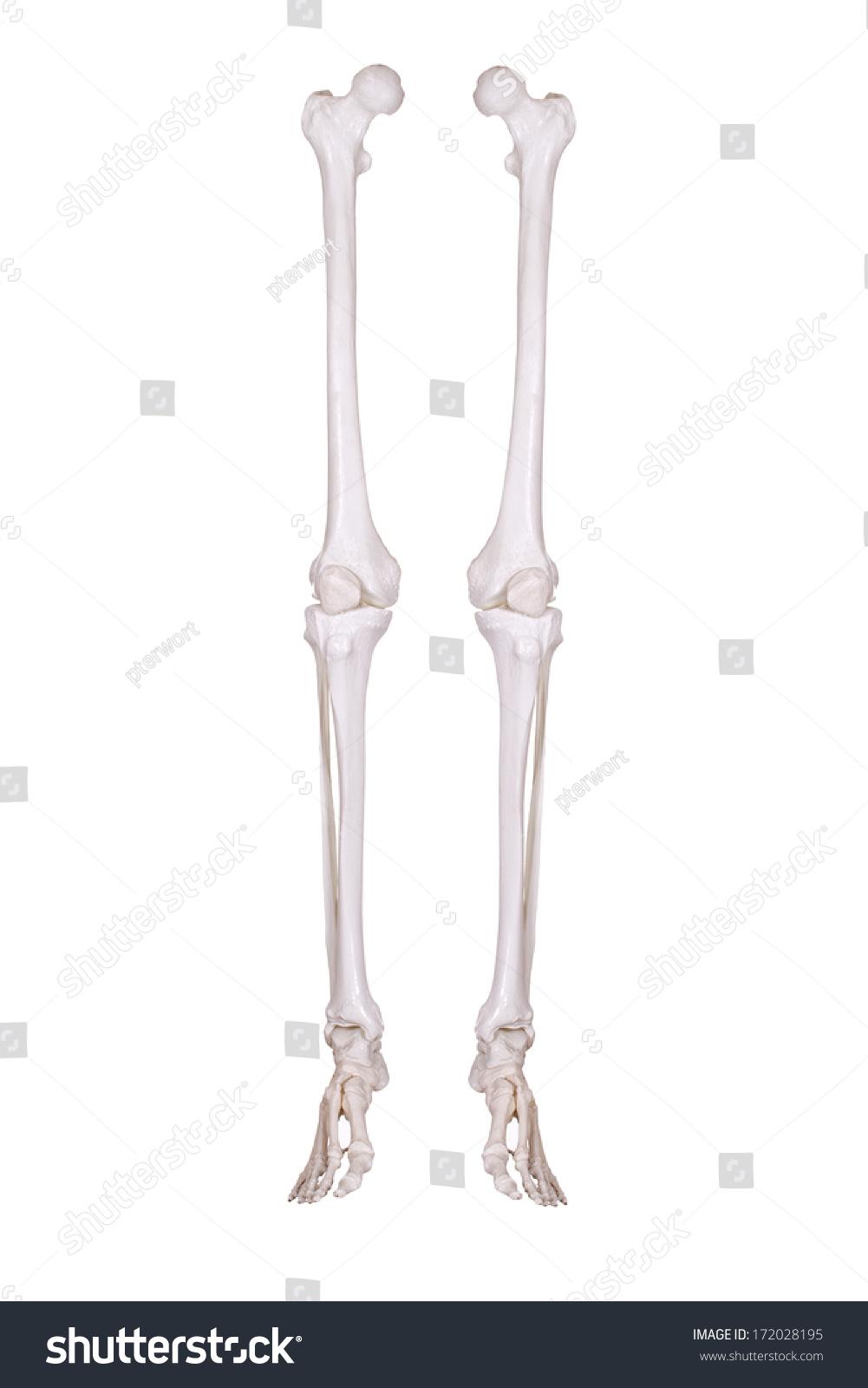 Detail Two Skeleton Legs Stock Photo Edit Now 172028195 Shutterstock