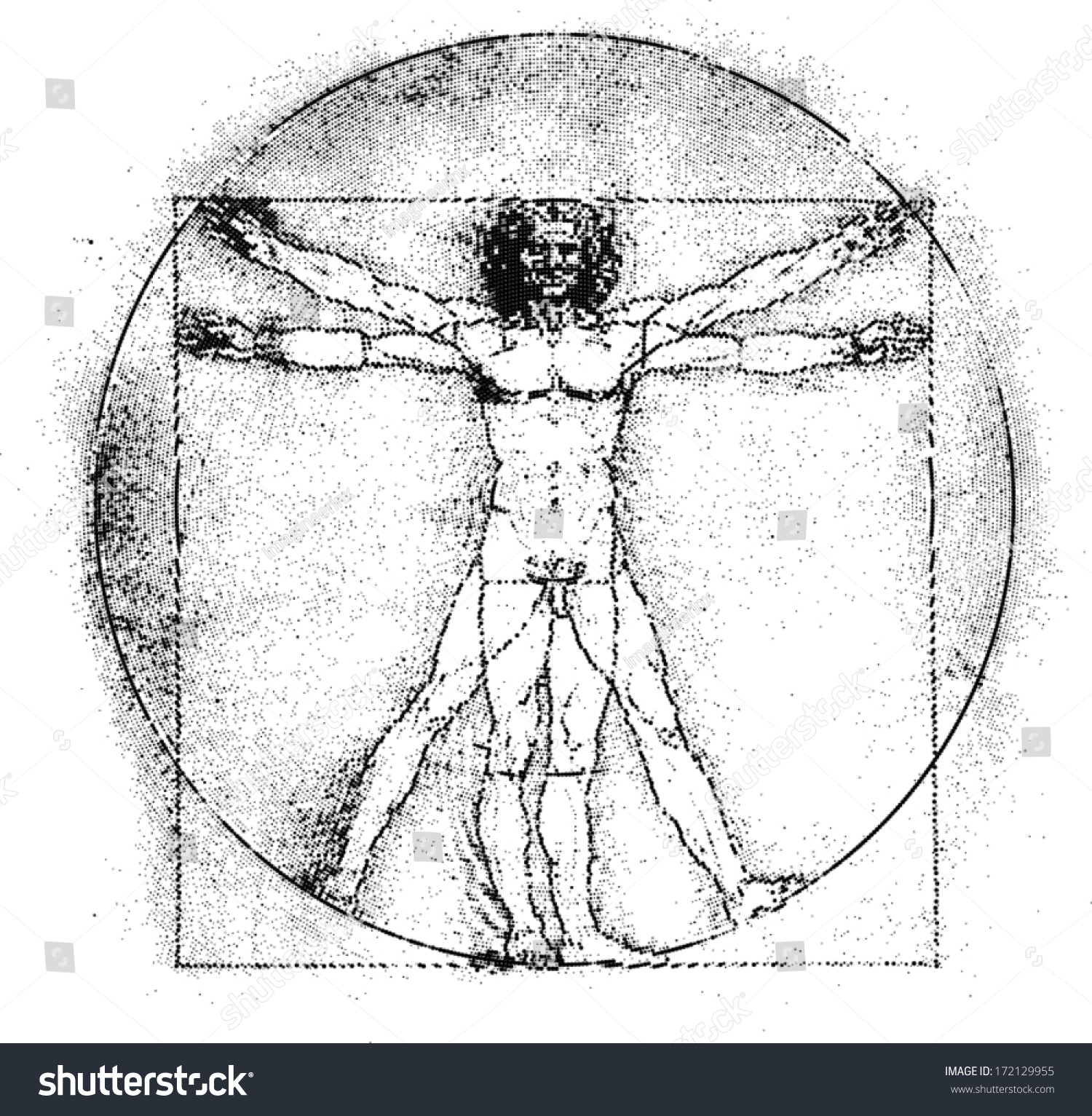 Vetruvian Man Human Anatomy Study By Stock Vector Royalty Free