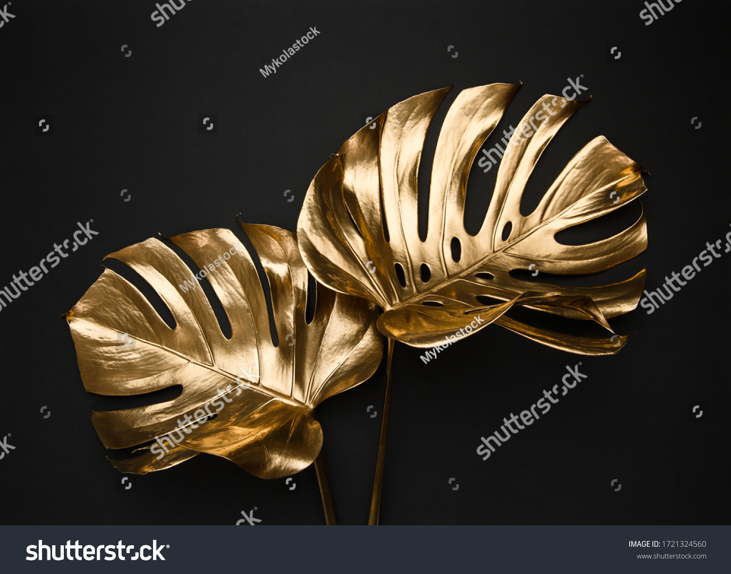 Closeup view of two luxurious golden painted tropical monstera leaves artistic composition. Abstract black background isolated. Creative jewelry concept. #1721324560