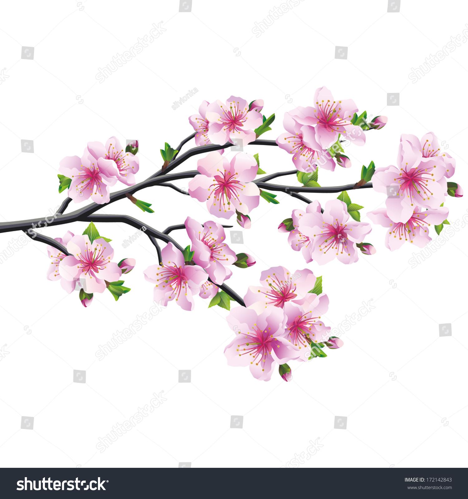 cherry blossom pink violet japanese tree stock vector. Black Bedroom Furniture Sets. Home Design Ideas