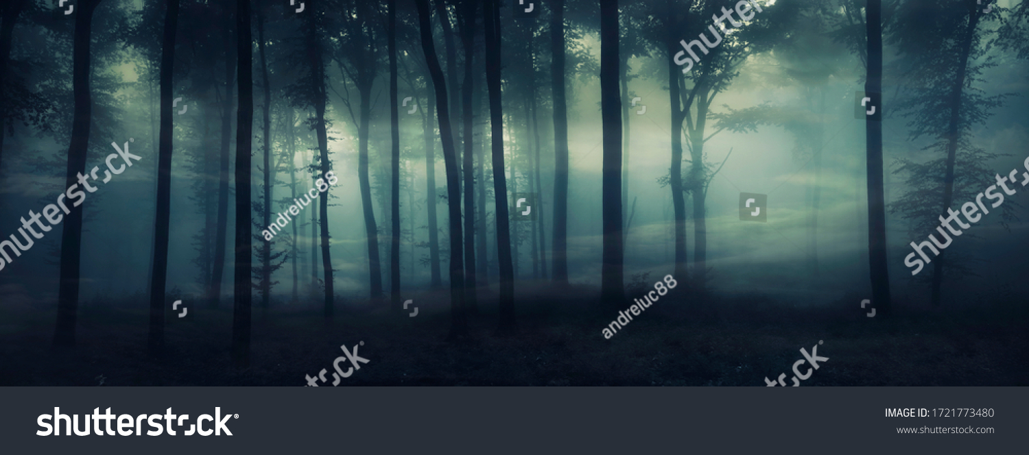dark mysterious forest panorama, fantasy landscape #1721773480