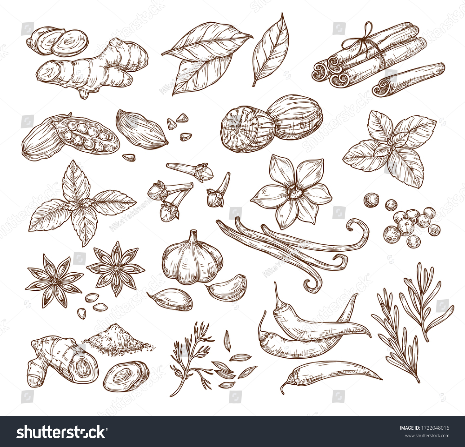 Vector sketch illustration of spices and herbs. Isolated on a white background. Ginger, cinnamon, vanilla, anise, basil, rosemary, turmeric. Use to create menus, packaging, patterns, prints. #1722048016