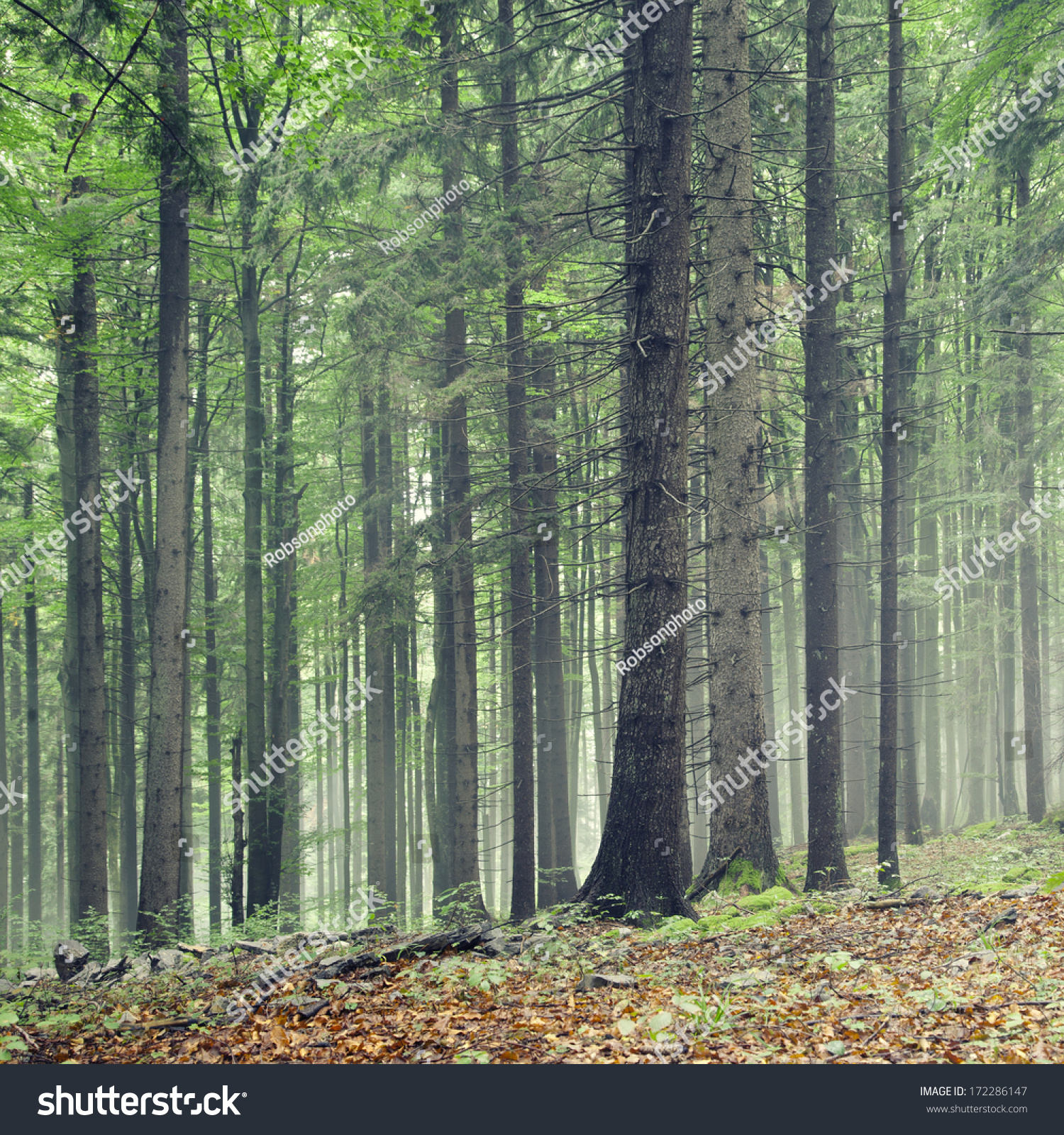 Natural Green Color Forest Trees Stock Photo 172286147 - Shutterstock