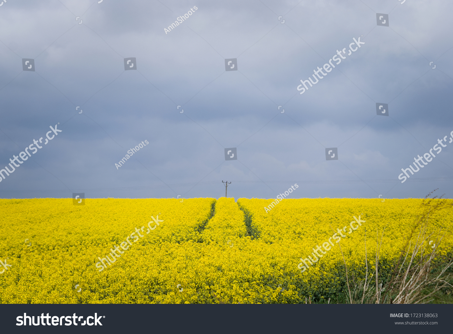 stock-photo-yellow-crop-field-blooming-r