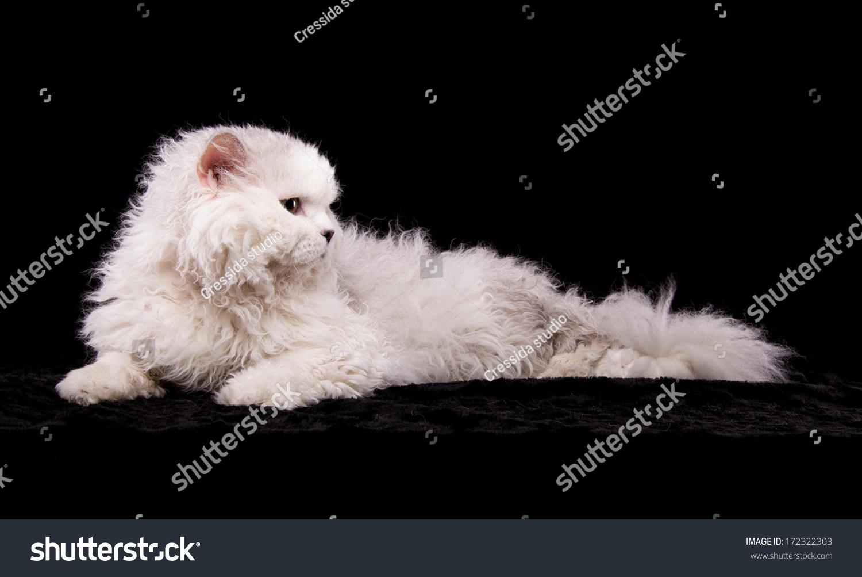 Stylish Cat beautiful stylish cat animal portrait beautiful stock photo