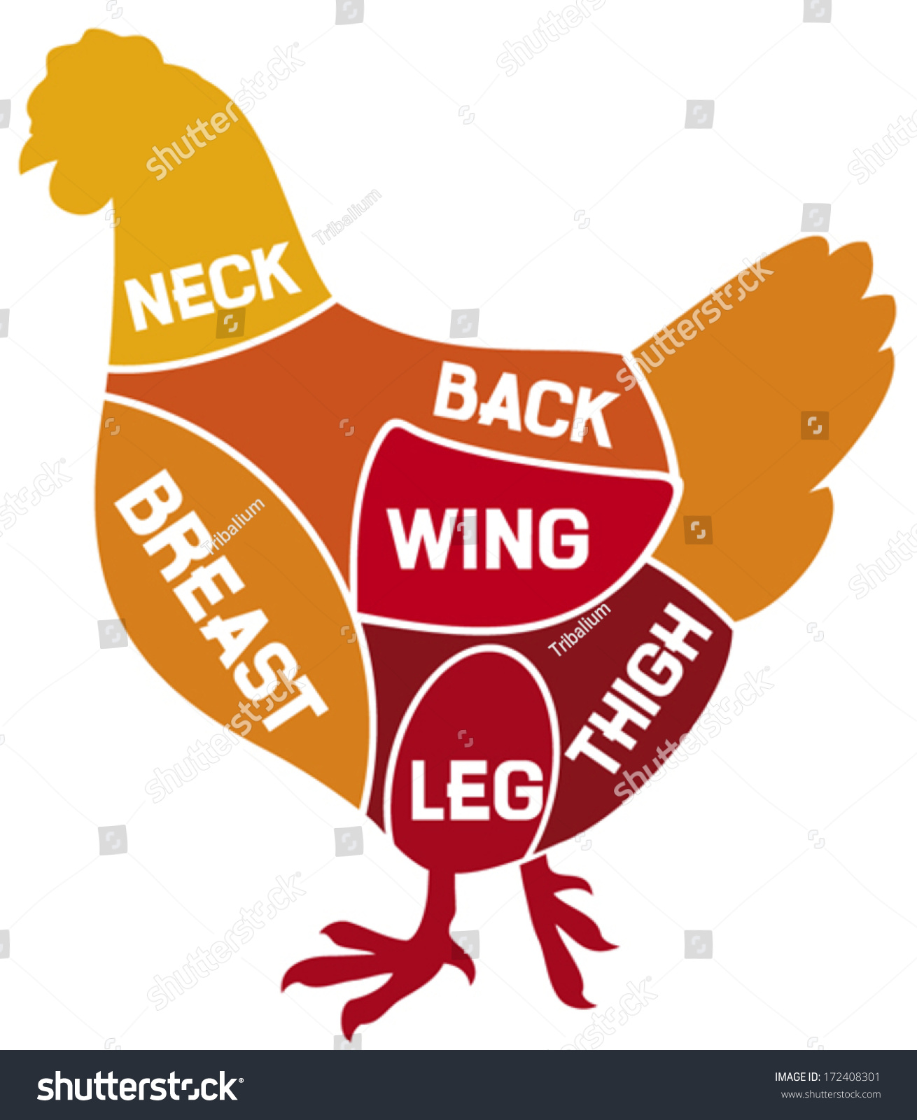 Chicken Cuts Diagram Stock Vector 172408301 - Shutterstock for Chicken Meat Cuts Chart  186ref