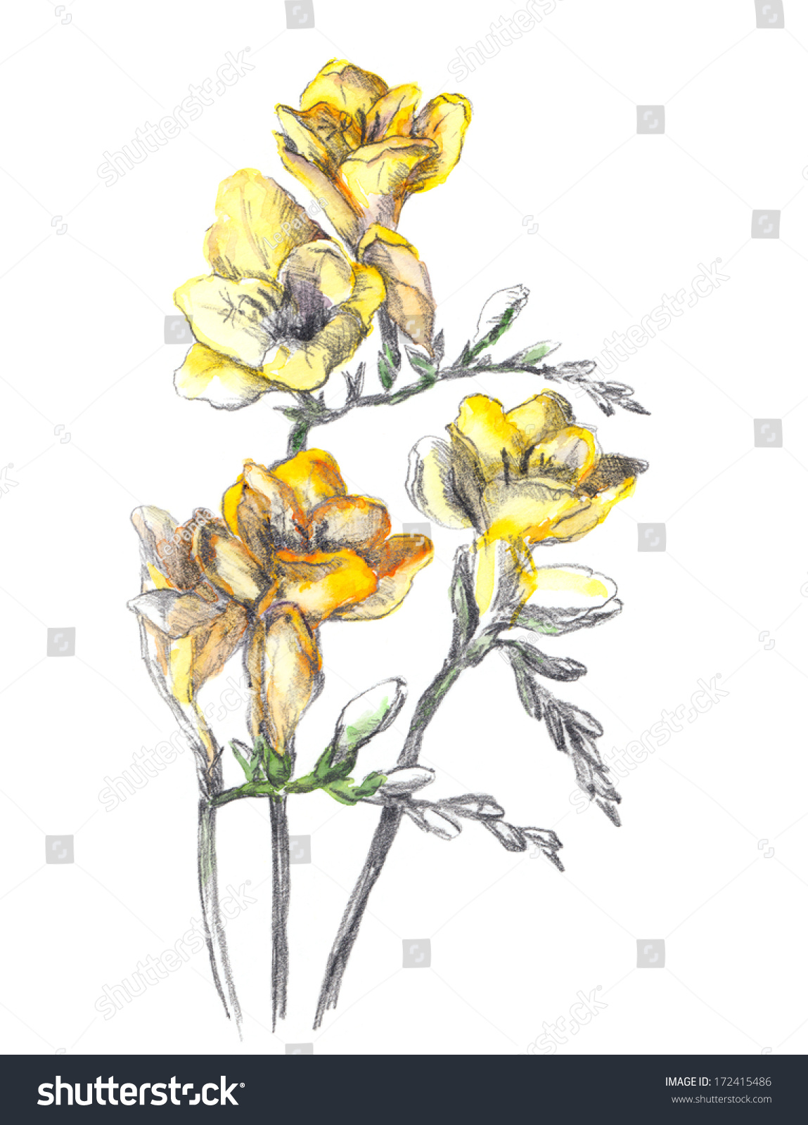 Retro Yellow Flower Drawing Line Contour Stock Illustration