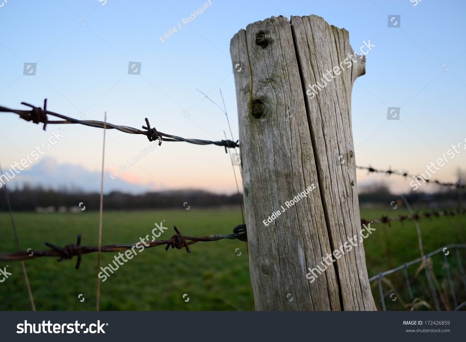 View Through Barbed Wire Fence Sun Stock Photo (Edit Now) 172426859 ...