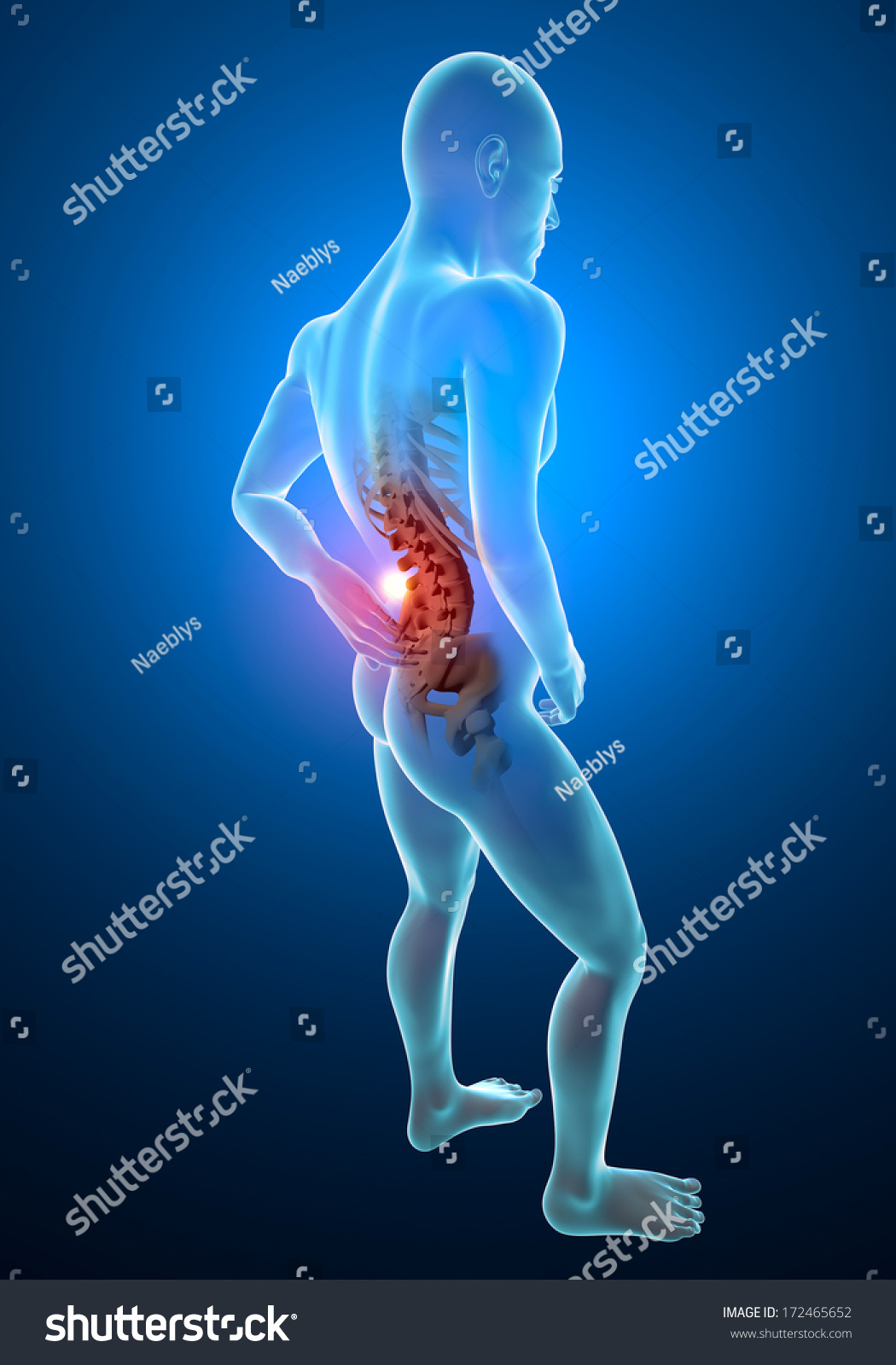Man Back Pain Pain Xray Skeleton Stock Illustration 172465652 ...