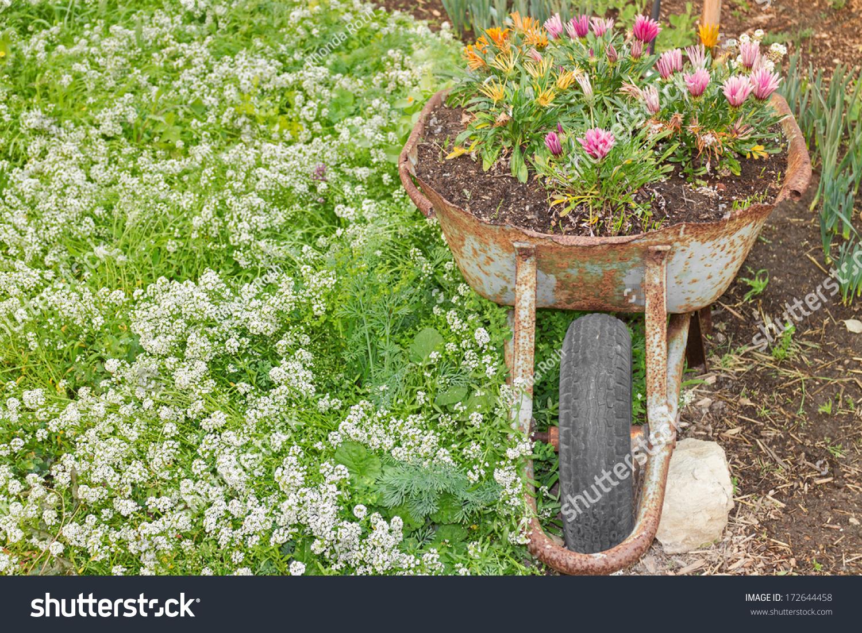 Old Rusty Wheelbarrow Used Decorative Flower Stock Photo (Royalty ...