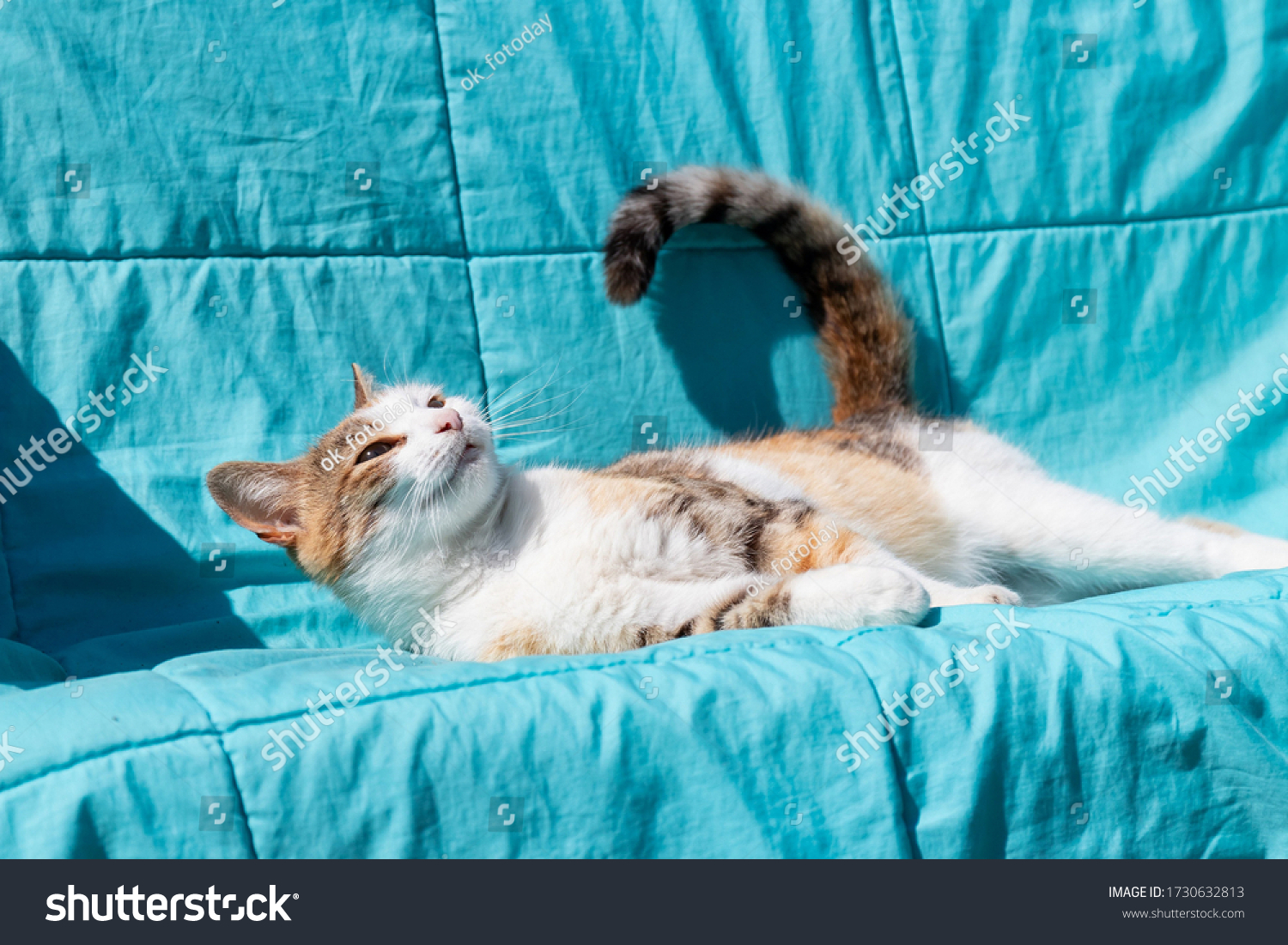 stock-photo-young-multicolor-cat-basking
