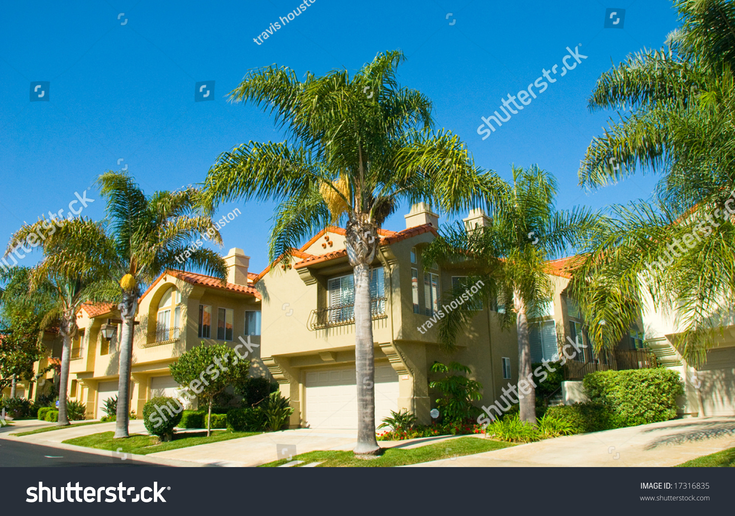 Queen Palm Trees Growing Among California Luxury Homes