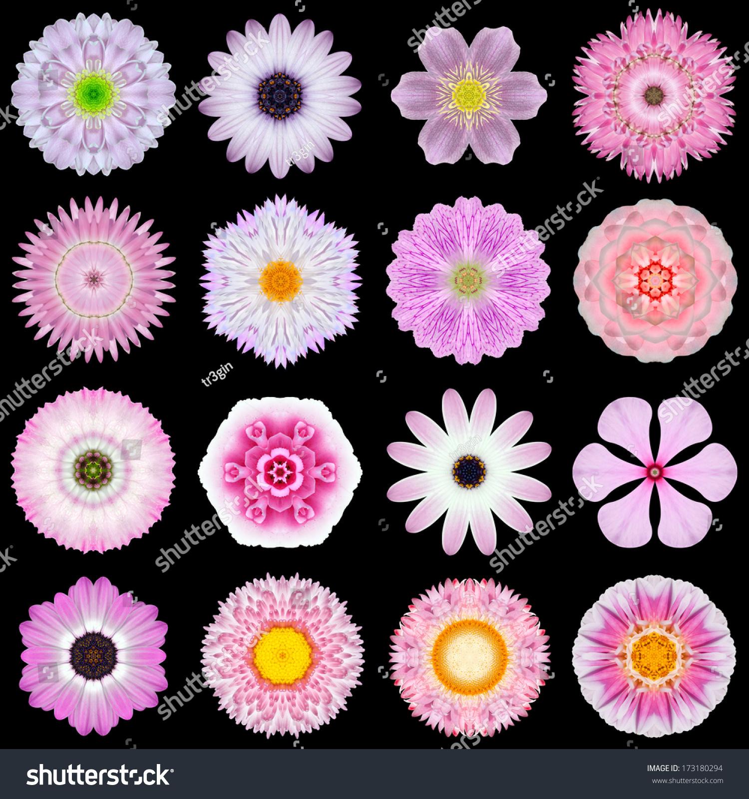 Big Collection Various Pink Flowers Kaleidoscopic Stock Photo Edit
