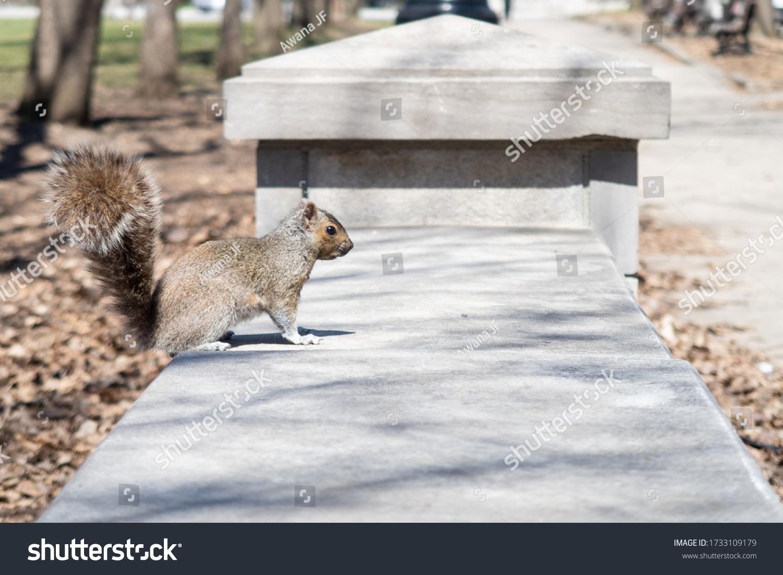 stock-photo-cute-eastern-gray-squirrel-w