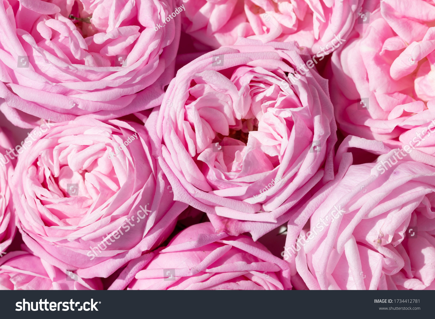 stock-photo-floral-background-cover-with