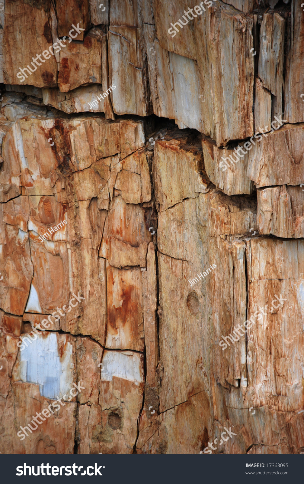A Closeup Detail Of A Petrified Redwood Tree Trunk In ...