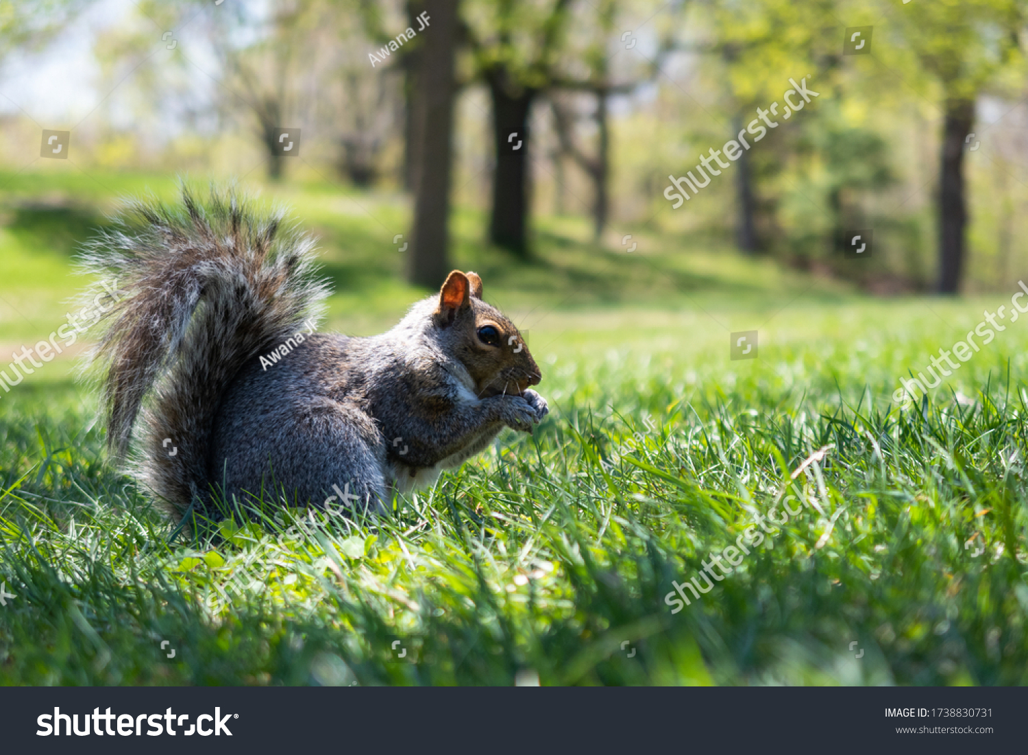 stock-photo-a-wild-squirrel-eating-in-th