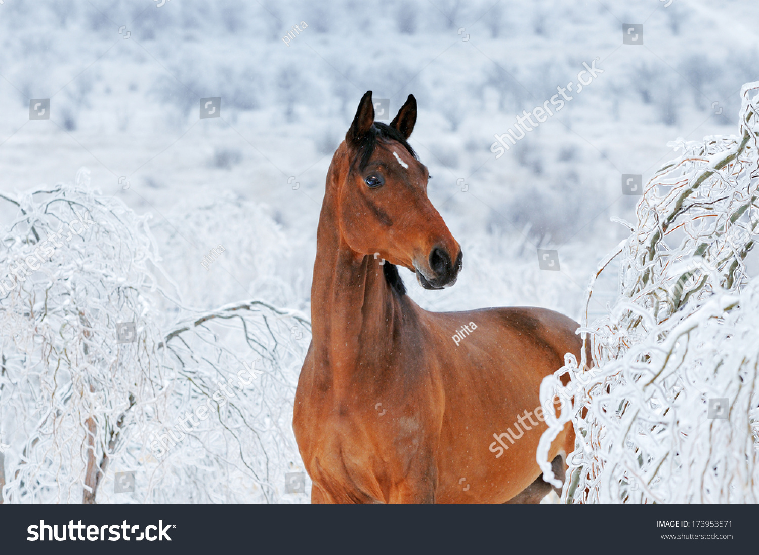 Beautiful Bay Horse Magic Winter Forest Stock Photo Edit Now 173953571