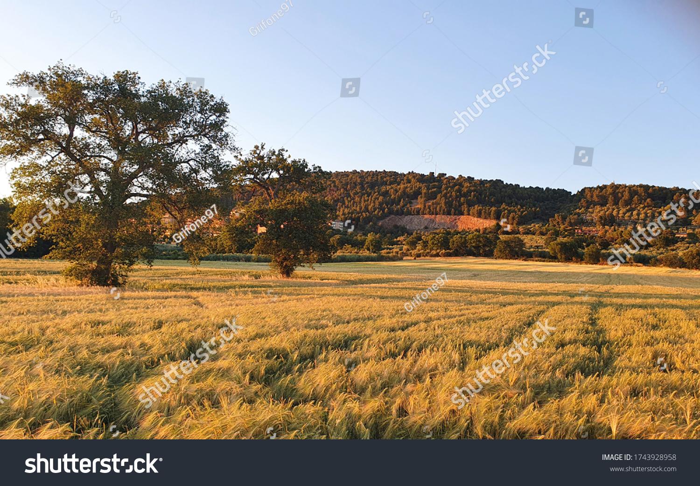stock-photo-amizing-spring-landscape-acr
