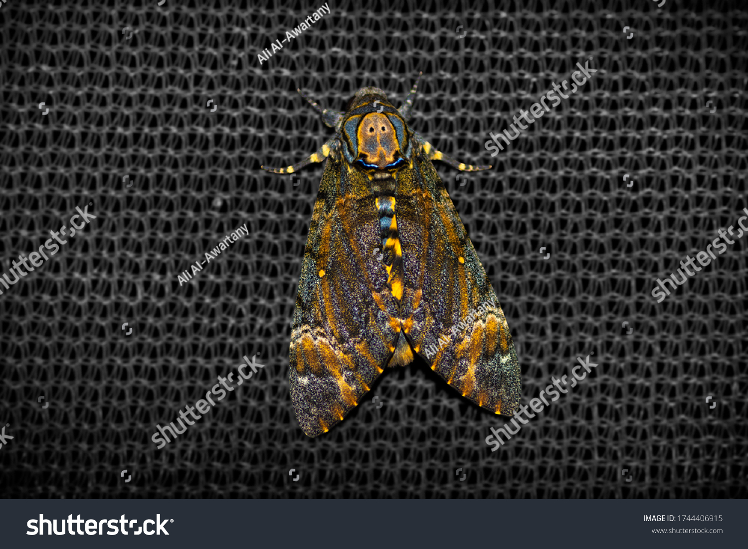 stock-photo-close-up-to-night-moth-on-bl