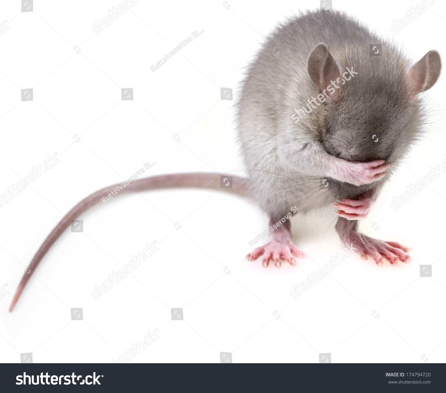mice men john steinbeck essays 100% free papers on of mice and men essay  8th grade essays a random act of kindness essays bullying in school essays  of mice and men, by john steinbeck,.