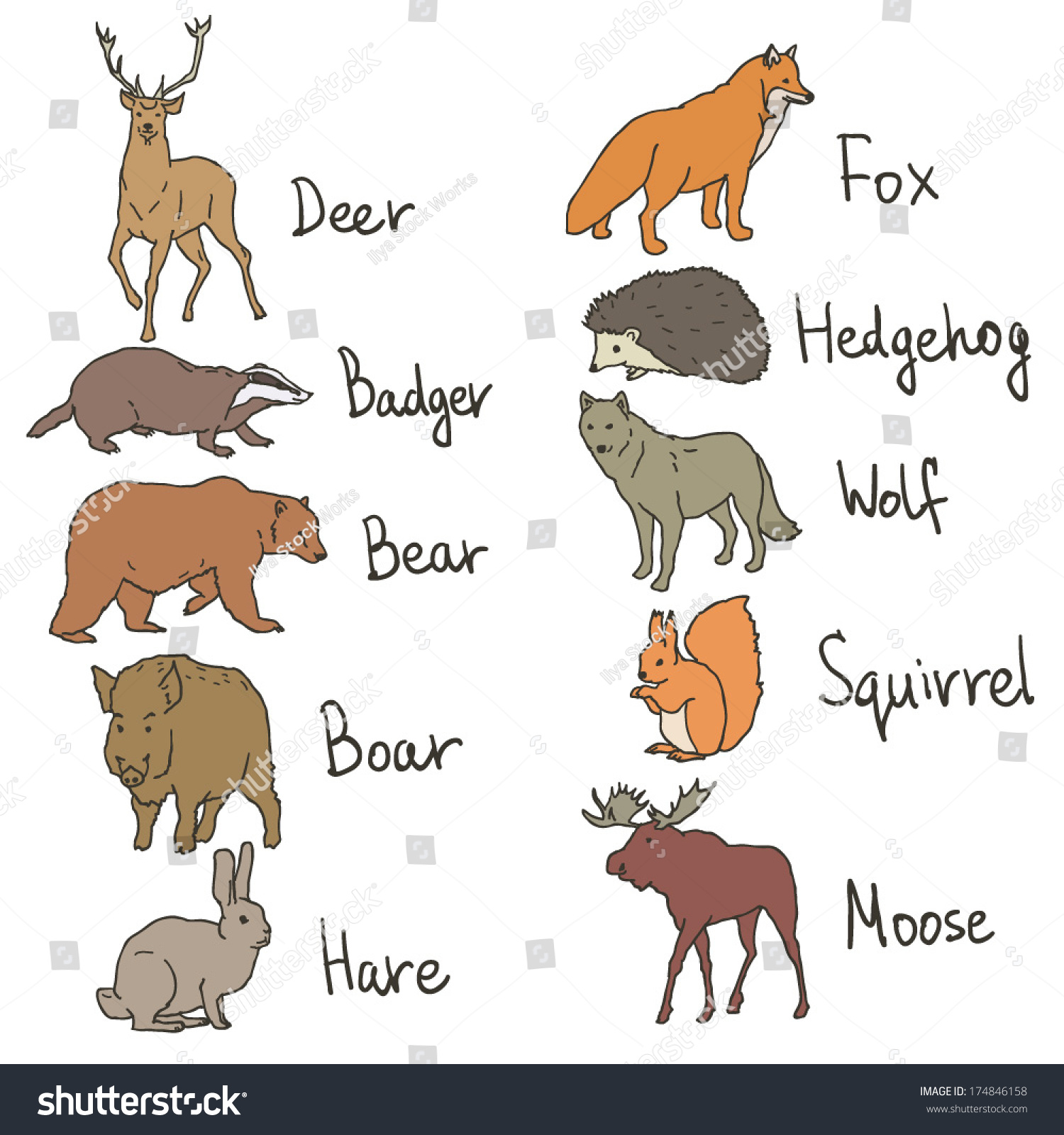 forest animals drawings icons set on stock vector