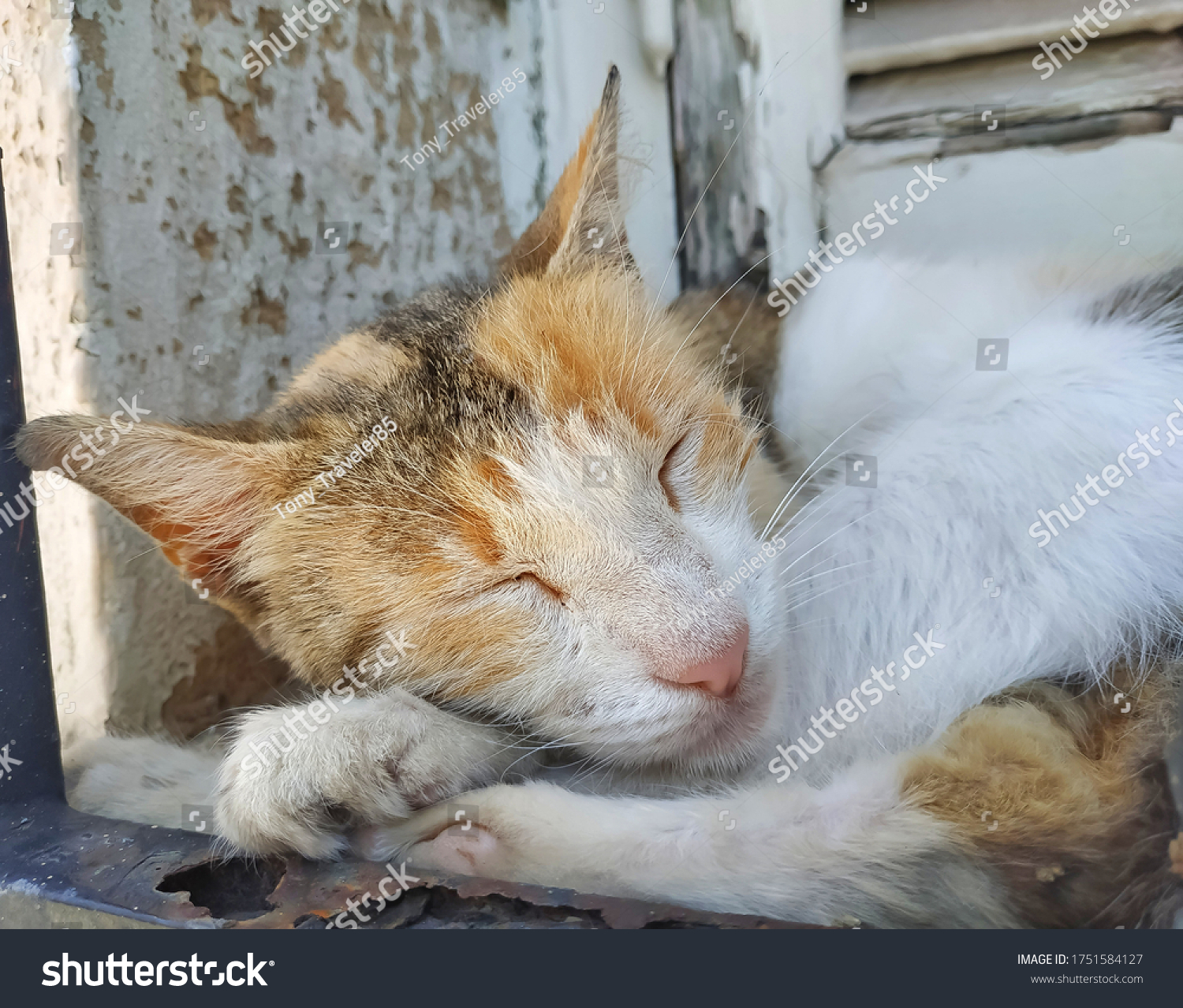 stock-photo-a-fluffy-sleeping-cat-on-a-p