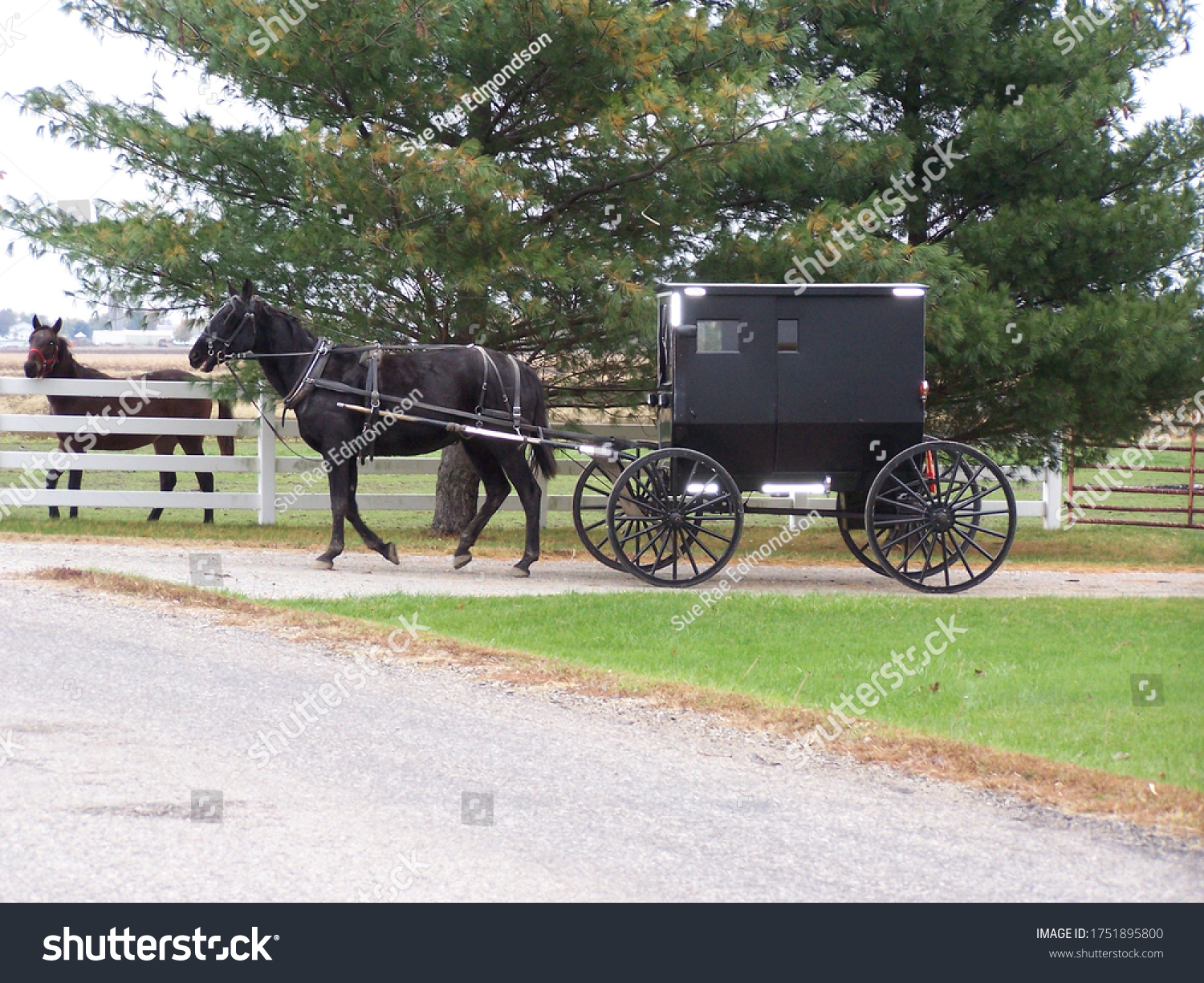 stock-photo-amish-black-horse-and-buggy-