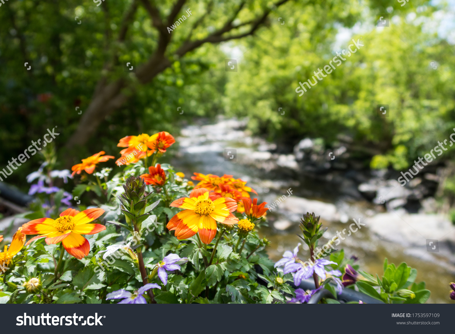 stock-photo-flowers-and-river-in-freligh