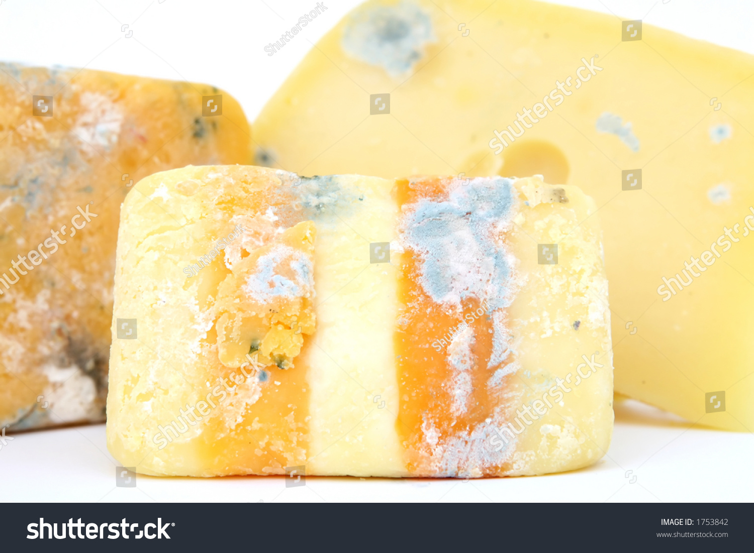 Serious Cheese: Know Your Microbes