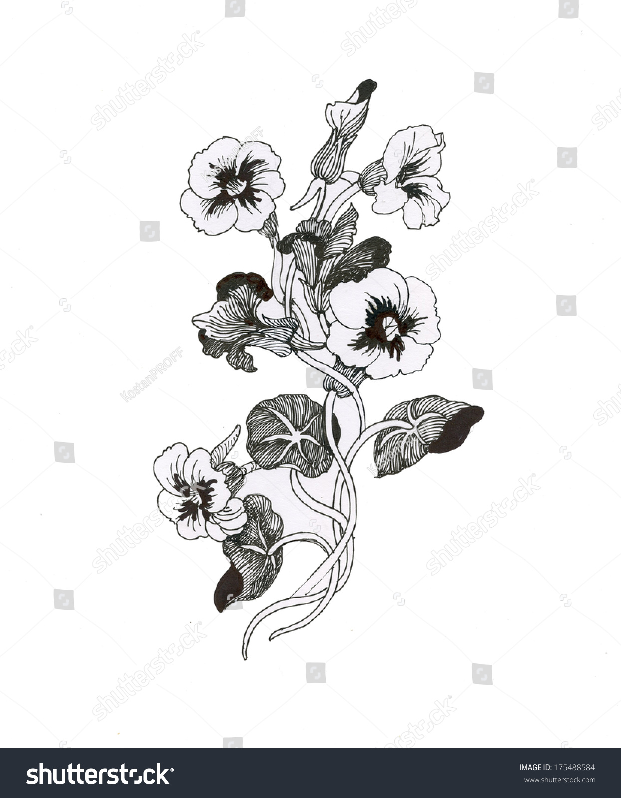 Beautiful painted flower sketch stock illustration 175488584 beautiful painted flower sketch izmirmasajfo