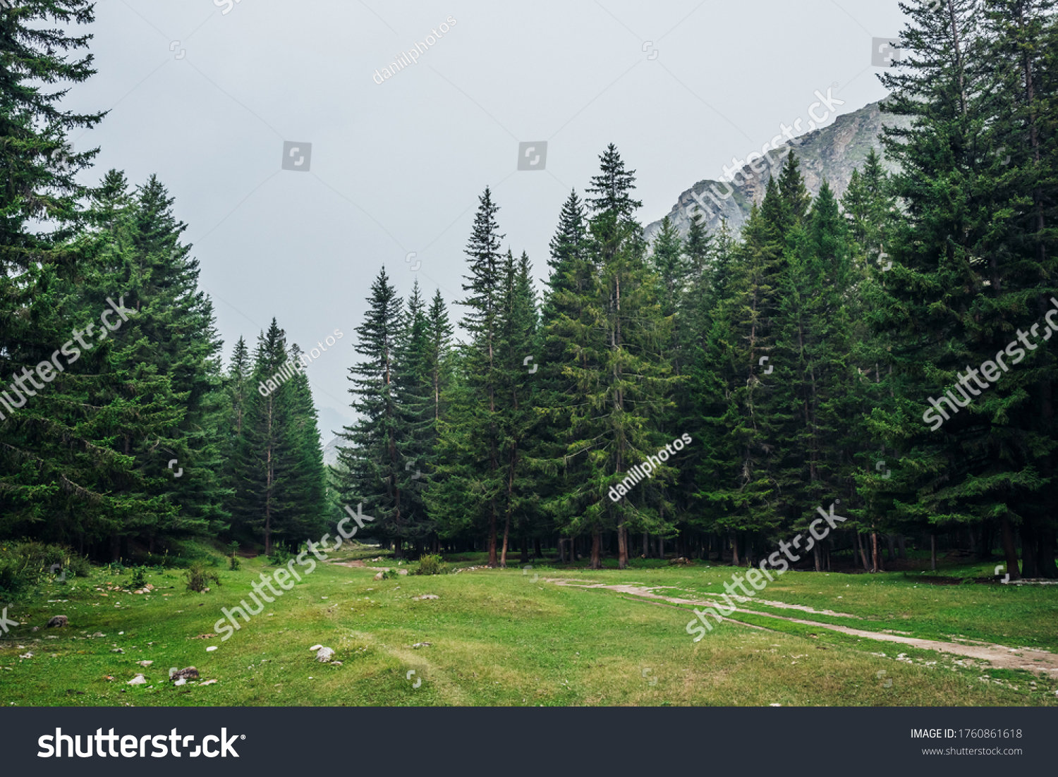 Atmospheric green forest landscape with firs in mountains. Minimalist scenery with edge coniferous forest and rocks in light mist. View to conifer trees and rocks in light haze. Mountain woodland. #1760861618
