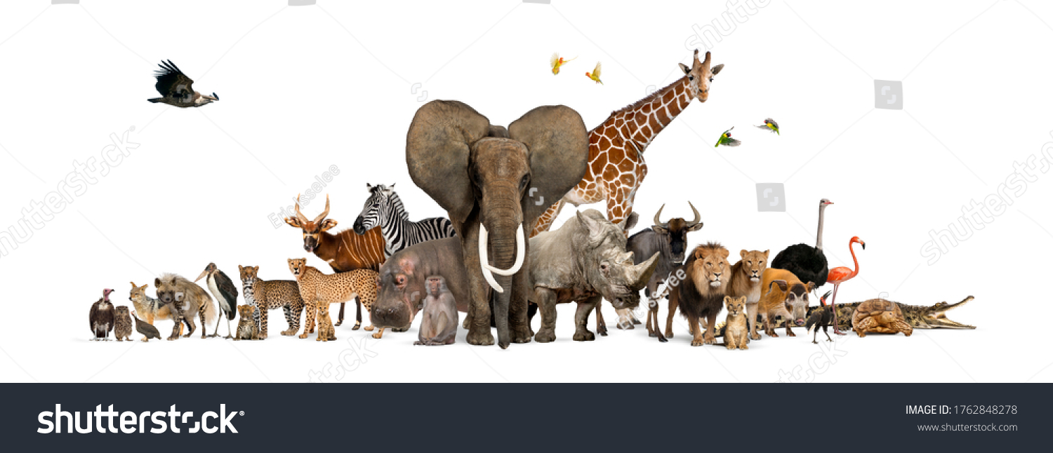 Large group of African fauna, safari wildlife animals together, in a row, isolated #1762848278