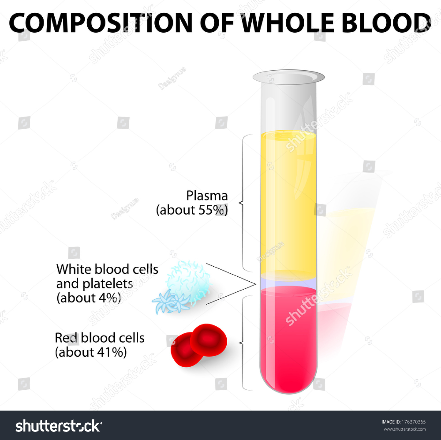 Composition Whole Blood Stock Vector 176370365 - Shutterstock