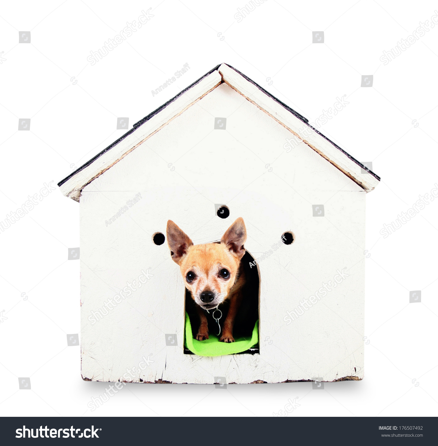 Super Cute Chihuahua Dog House On Gray Stock Photo Edit Now Download Free Architecture Designs Meptaeticmadebymaigaardcom