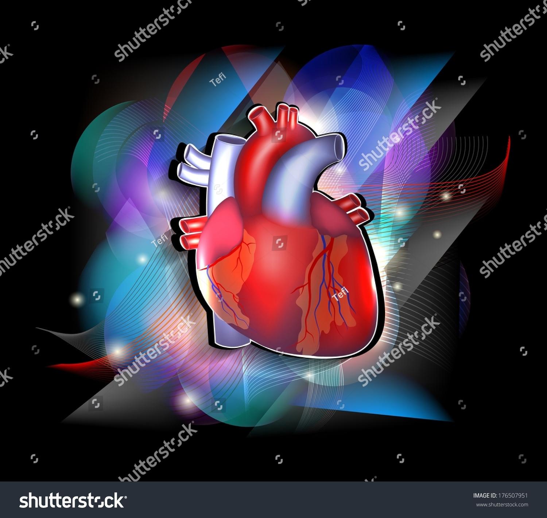 Bright Cardiology Poster Human Heart Anatomy Stock Vector 176507951 ...