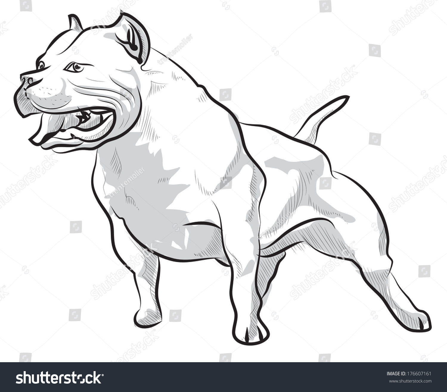 vector sketch drawing pitbull barking