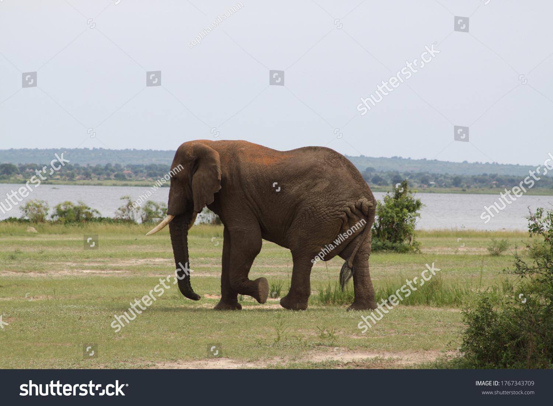 African safari in Kenya wildlife #1767343709