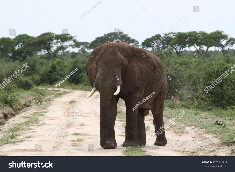 African safari in Kenya wildlife #1767343712