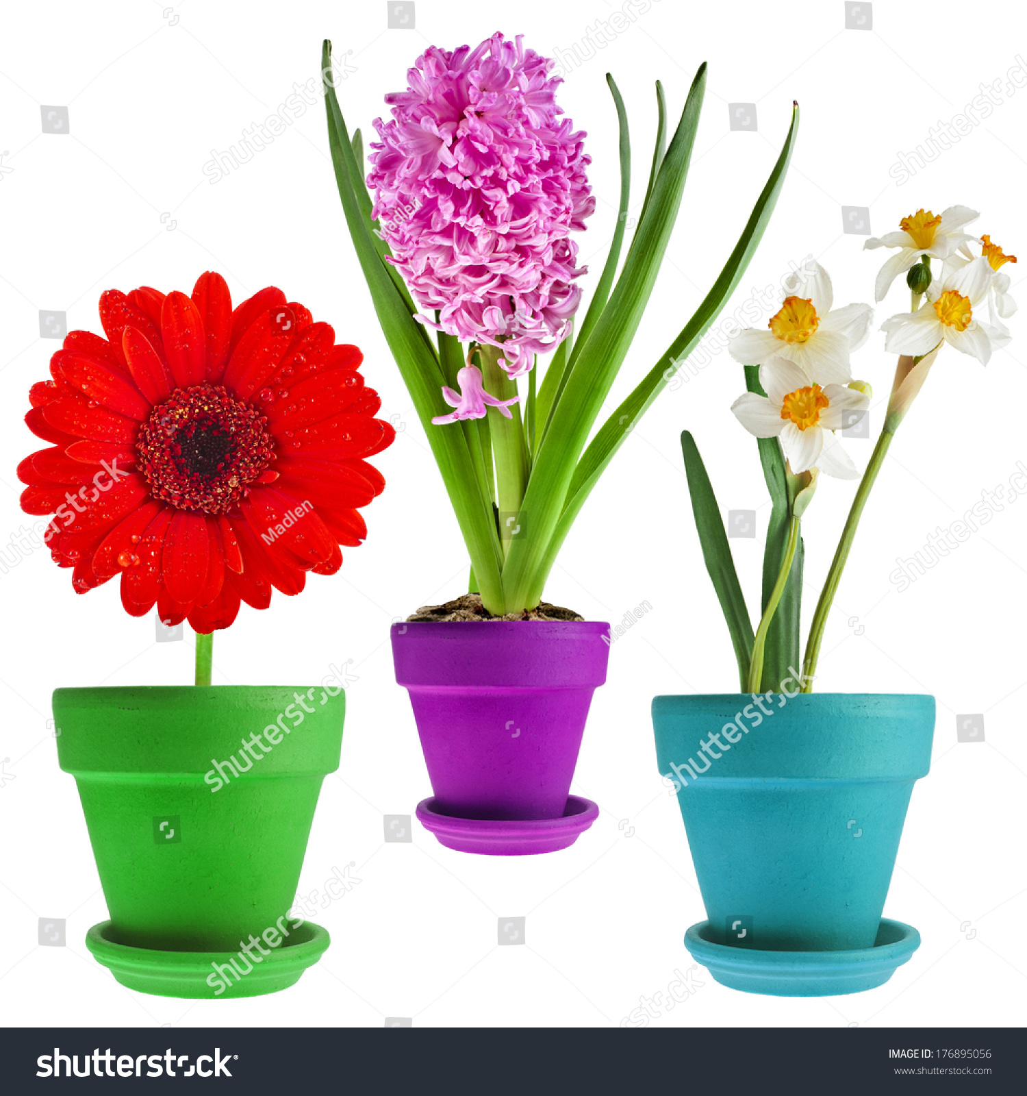 Spring Flowers In Pots Isolated On White Background Vector