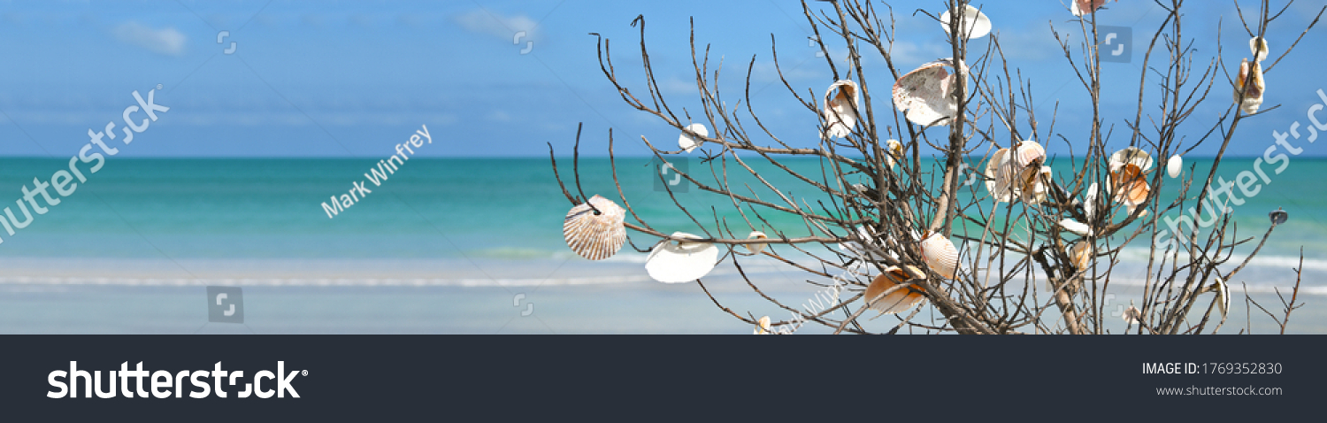 Branch on Anna Maria Island Beach that people have placed Sea Shells on. Beach Landscape Banner