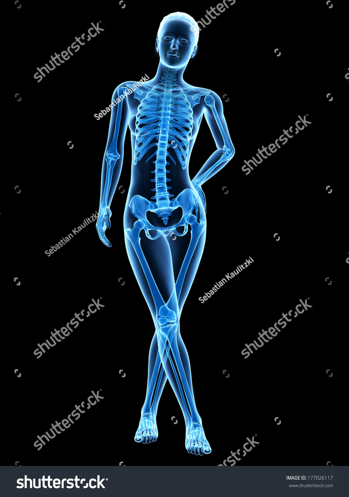 Medical 3 D Illustration Female Anatomy Skeleton Stock Illustration ...
