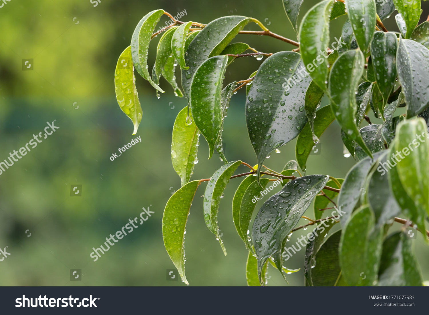 stock-photo-the-freshness-of-the-rain-sm