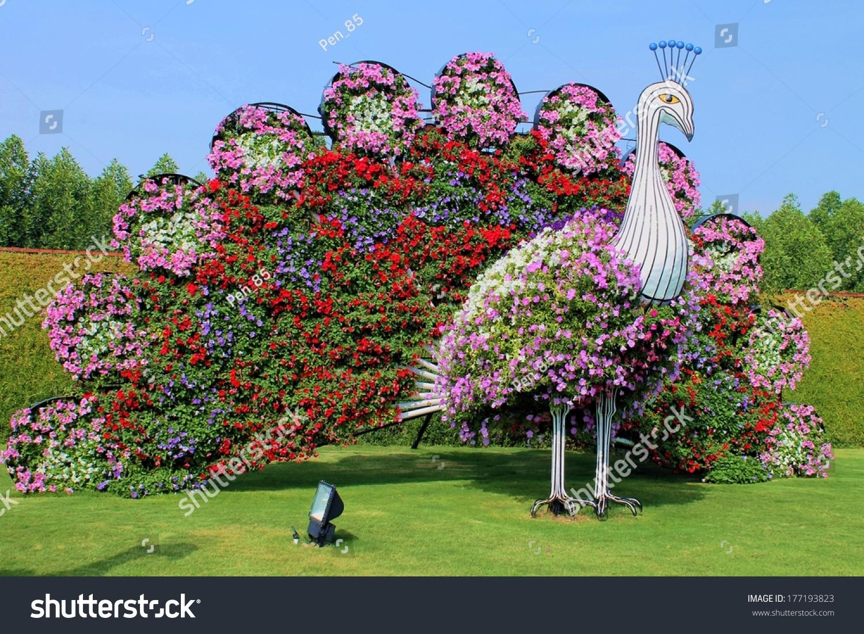 Natural Flower Garden : Dubai uae januari stock photo