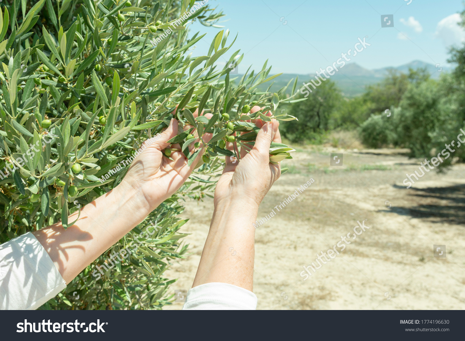 stock-photo-hands-show-the-new-harvest-o