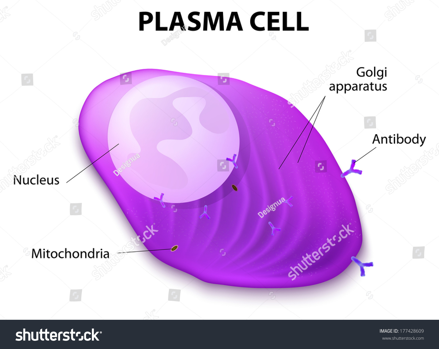 how to sell blood plasma