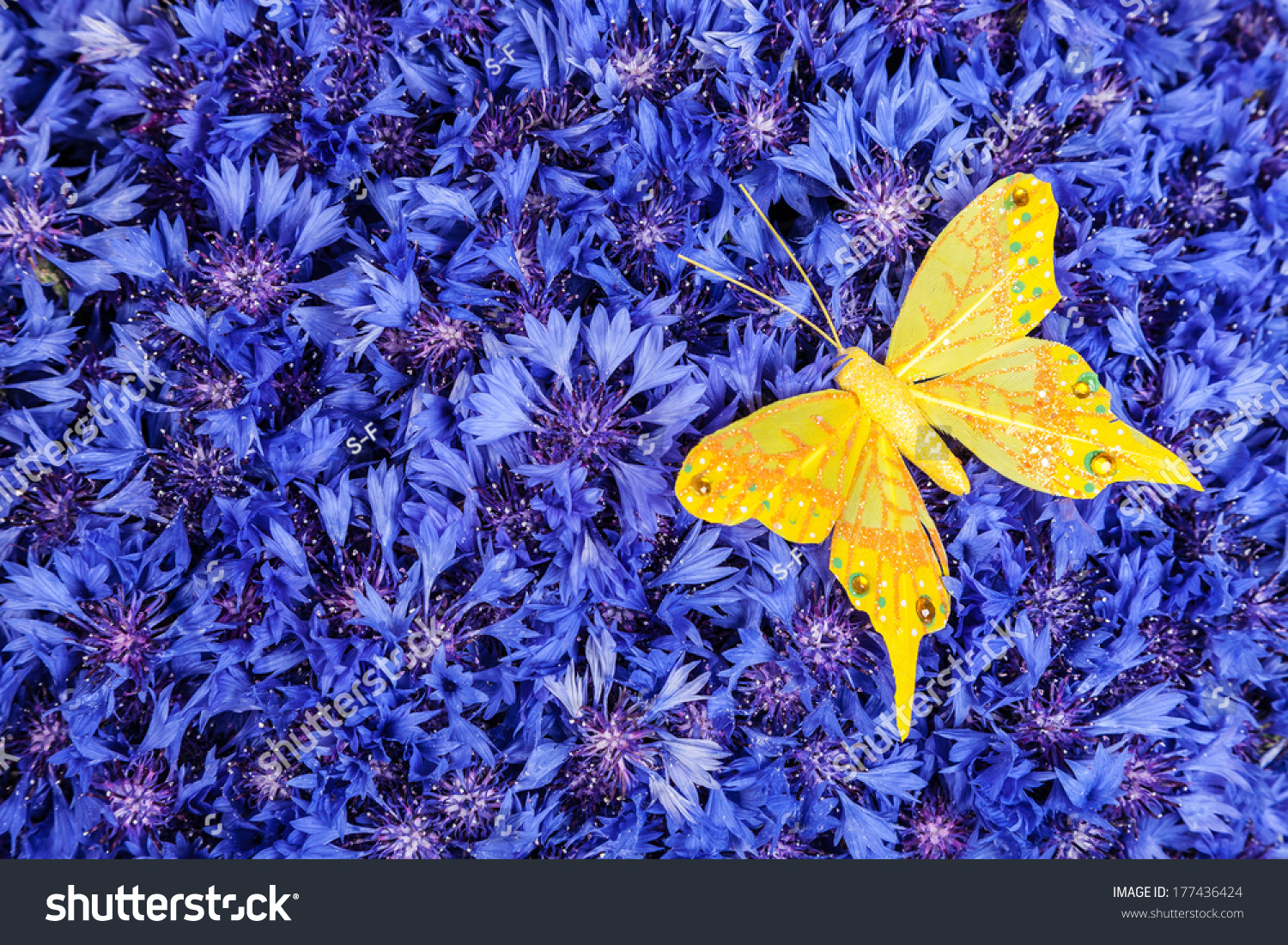 Spring Flowers Blue Cornflower Yellow Butterfly Stock Photo Edit